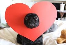 pug love / by Kelly Lennon