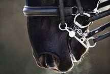 horses and riding (İtimAT) / Hükmetme eğilimini terbiye edebileceğiniz en güzel alan..
