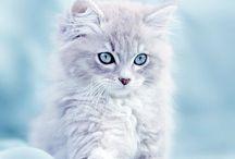 ✰ Cuttie Cats