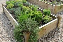 Raised Beds / Raised Vegetable Bed Kits For Growing your own vegetables, fruit, herbs, flowers, and shrubs. Timber raised beds are ideal for vegetable gardening as you can tailor the soil within to suit whatever crop you are growing there. It also means that vegetable crops are raised above ground level and are kept away from foot traffic. #RaisedBeds #RaisedVegetableBeds #GardenPlanters