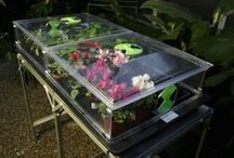 Propagators / Growing Your Own Vegetables and Plants from Seed and Cuttings
