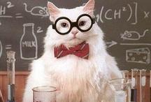 I am a nerd / by Allegra Lightbody