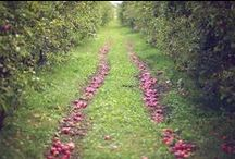 In the Orchard / by Jessica