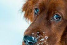 Dogs & Puppies / Tips, pics, quotes, info about dogs & puppies including our own. The board also has Homemade dog treat ideas, doggie gifts, support for dog and puppy owners and more!