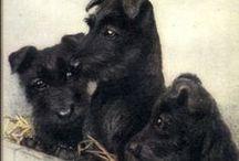Cairn Terrier , Scottish Terrier ( Scotland )
