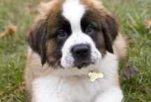 Saint Bernard ( I taly/ Switzerland )