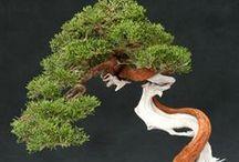 Bonsai & Topiary