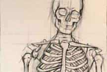 Anatomy & References
