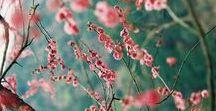 florals I love / Floral design reference that inspires me