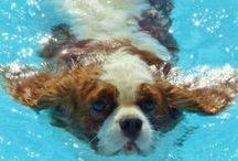 PETS IN THE WATER