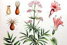 Melaina'Herbs-Land Apothecary