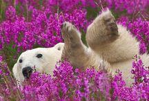 My beautiful home Alaska / Beautiful scenery in Alaska / by Elaine Hornback