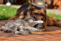 Cats and Dogs / animals