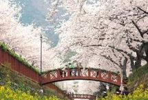 Cherry Blossom Festivals 2015 / Enjoy collection of scenes from different parts of the country