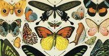 Lépidoptères / Oui ou alors tu peux juste dire papillon sinon.