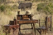 African Adventures / The Kalahari is calling! Take your boots and grap your camera, the next picture is just behind the next tree!