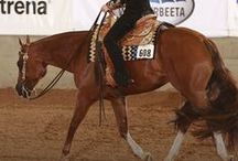 One big horse board