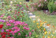 Jardin : massifs fleuris