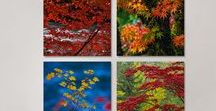 """Peter Lik Element Packs / For a taste of the Peter Lik experience without going """"full size,"""" his stunning LIK ELEMENTS™ are the answer. All of these themed sets have been curated by Peter and are perfect for any space!"""
