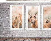 Wildlife {Collection} by Alex Serafini