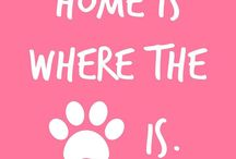 Precious Paw Prints / Mostly what we love that is #PreciousPawPrints and other things we just love to remind of us about what we love!!
