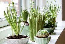 Plants & Planters