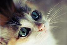 CAT FAQ's