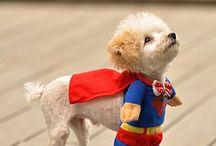 Vestidos para mascotas
