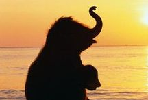 Elephant - Hippo - Giraffe - Zebra ..