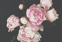Flowers | Fleurs