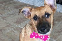 The adventures of Baby the dog! / The adventures and misadventures of Baby the dog!  #baby #ababyslife #preciouspawprints  http://www.PreciousPawPrints.com http://PreciousPawPrints.etsy.com
