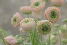In the Garden / Beautiful gardens, garden design ideas, garden architecture and general floral loveliness