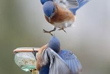 Birds / Bird photos / by Nancy Nipper