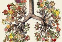 Artwork - Organs/Anatomical / by Gina Grimm
