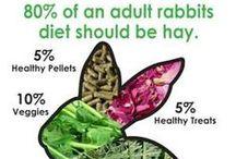 Rabbit care - Bunny love