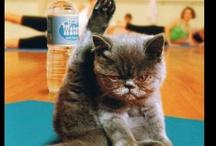 Cat Lover! / by Jennifer Hanks