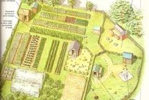 homesteading/farming/self sustainable / by alan whitelaw