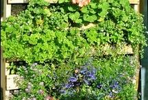 Tuinieren | Gardening