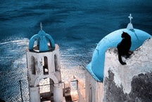 Kitties On Location / Cats at identified locations around the world / by Buster