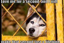 Animal Adoption Saves Precious Lives