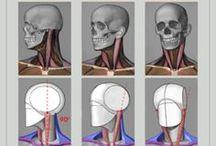 anatomy 解剖資料