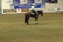 Salone del Cavallo- Reggio Emilia / Campionati