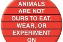 Animals have rights too! stop the abuse ☮