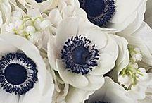 Flowers art & Garden