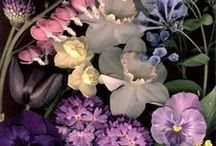 FLORALIA / blooms, colours and texture for photo shoot