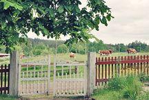 Trädgård - Gården / Tips och Ide'er till trädgården och gården överlag