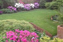 My Garden / My garden around the year