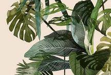 Illustration & Botanic