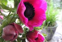 Flower-Friday