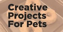 Creative Pet Projects / Make your own pet treats, toys, and more with these simple DIYS including dog treat recipes, cat toy instructions and more.